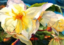 "Honourable Mention: Marney Ward Canada Butchart's Begonias 21x29"""