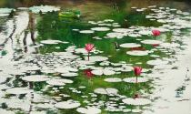 Aung Sint Myanmar Water Lily Pond 46x76 cm