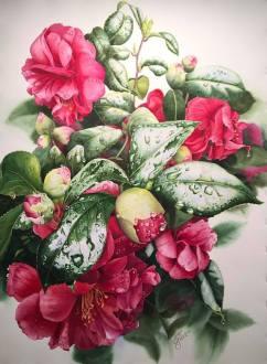 """Janet Gilliland USA February Camellias 21x31"""""""