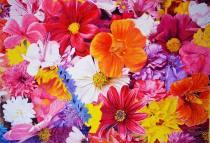 Frank Santos Portugal Spring Celebration 35x50 cm