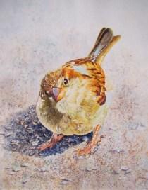 Gôler Kumru France Birds Eye View 65x50 cm
