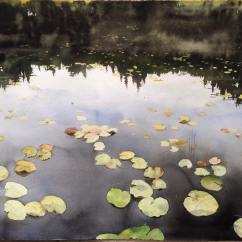 Peter Eugén Sweden Waterlilies in Sweden 105x76 cm