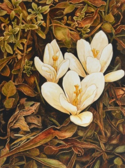 "Virginia May - Canada. Spring Tapestry. 11x15""."