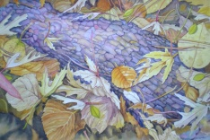 "Josephine Sherman - Canada. Treasures of Late Fall. 15x22""."