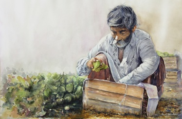 Momin Wasim Khan Canada The Guava Man