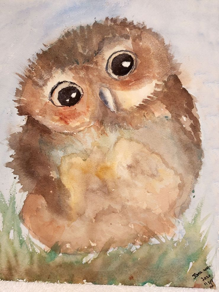 Baby Owl, Jona Wagner,11